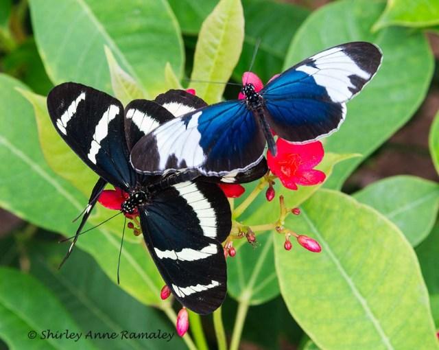 Butterfly 6 MAIN
