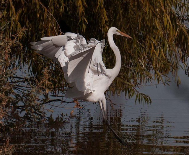 Egret Landing BIRDS