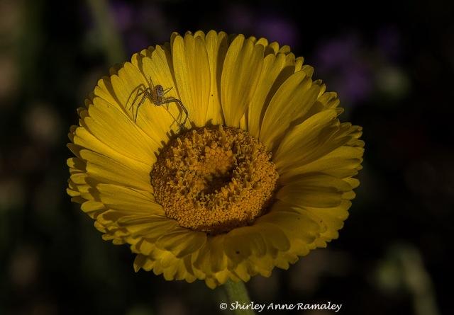 303 wildflower (1) PLANTS & WIN