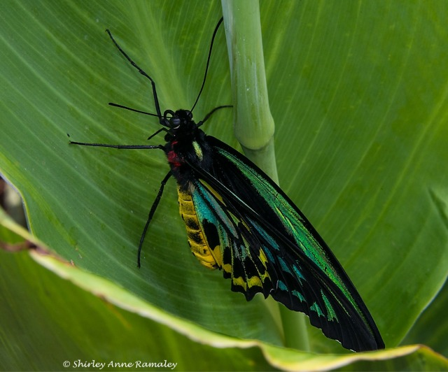 Butterfly 2 WIN