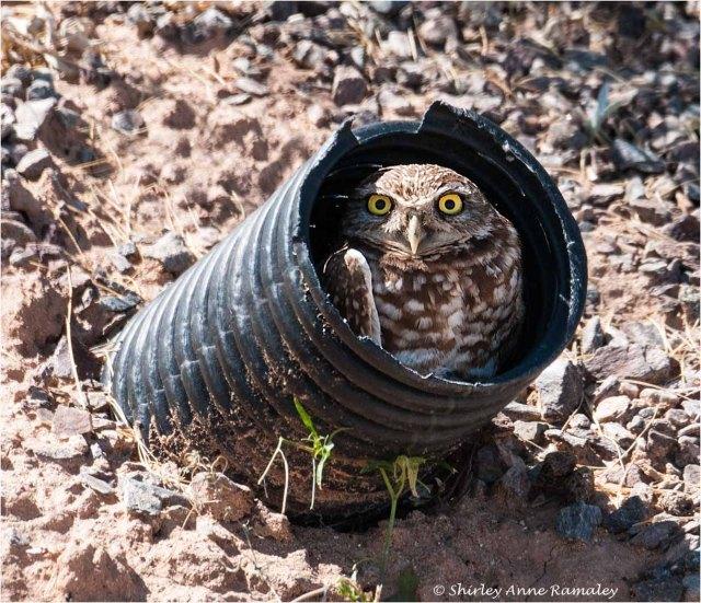 Owl 2 BIRDS & WIN