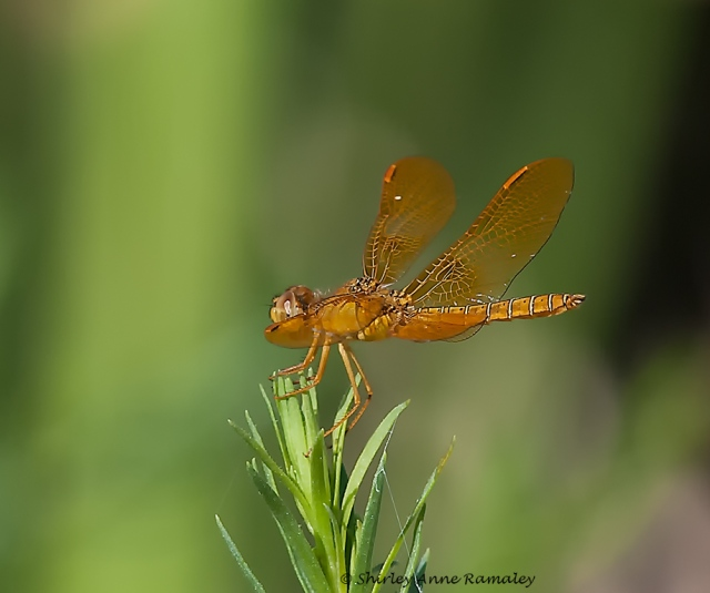 Tres Rios Dragonfly 821 MAIN
