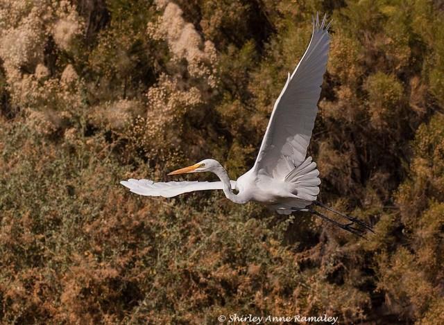 Tres Rios Egret MAIN