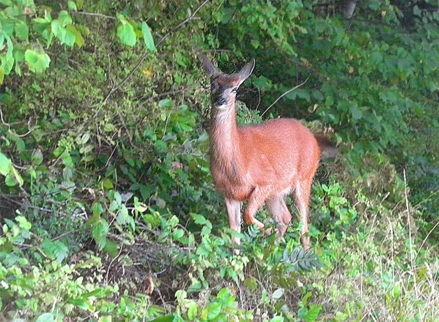 camp deer 1 BLOG