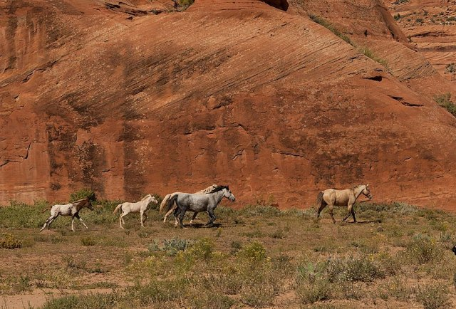 Indian Ponies Canyon de Chellymain