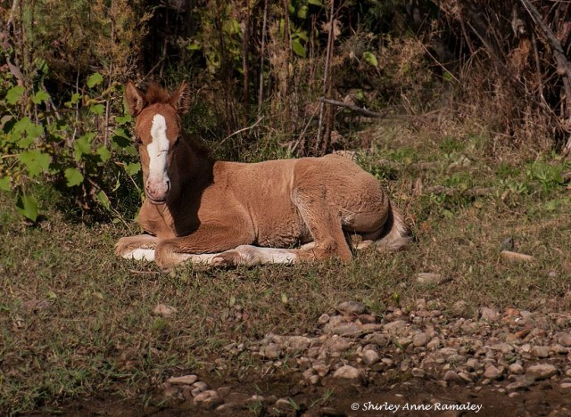 SR Horses 5 WILD MAMMALS & PHOTOS & BLOG