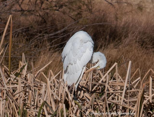 Whitewater Draw-1002 BIRDS & BLOG