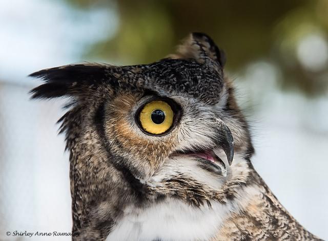 Owl 1 NIKON & BLOG