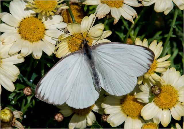 Butterfly 5 MAIN & BLOG