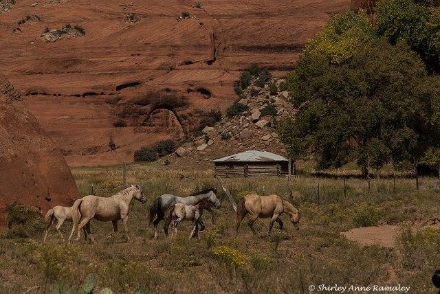 Canyon de Chelly-421 WILD MAMMALS & MAIN & PARKS & BLOG
