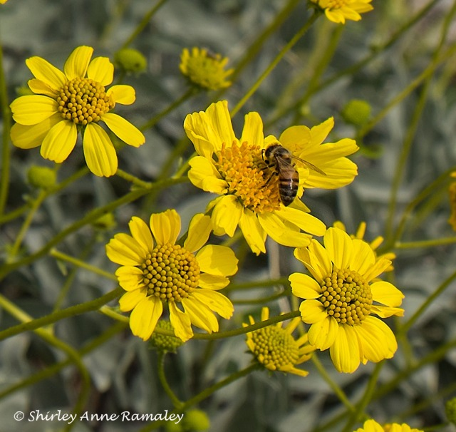 Lake 2 with Bee BUGS & BLOG