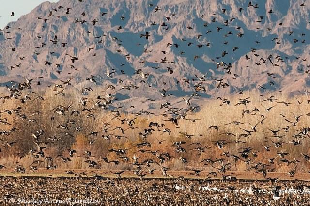 Cibola 1 PARKS & BIRDS & BLOG