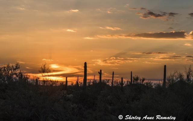 Sunset 1 MAIN & BLOG