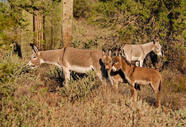 Burros 1 MAIN & BLOG