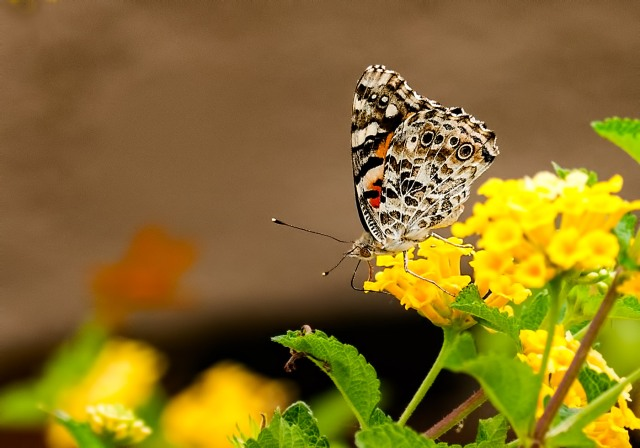 Butterfly 1 BLOG