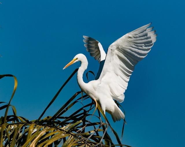 Egret 14 MAIN & BLOG