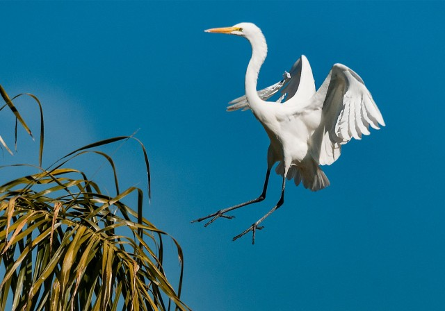 Egret 4 WILD BIRDS & PHOTO OF DAY & NATURE & BLOG