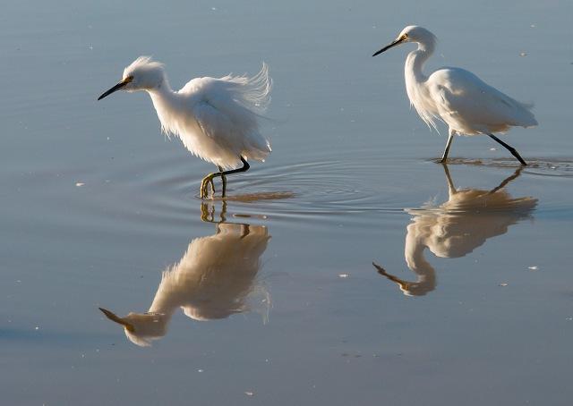 Pals 2 BIRDS