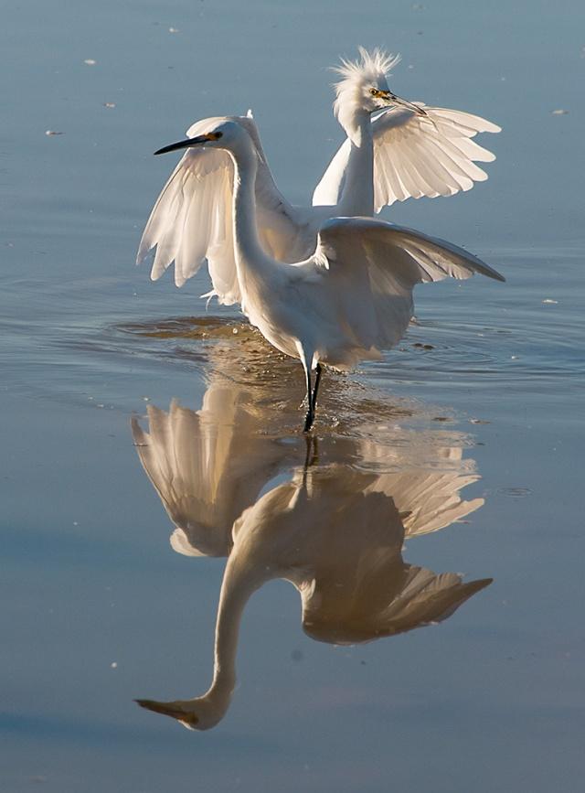 Two landing BIRDS