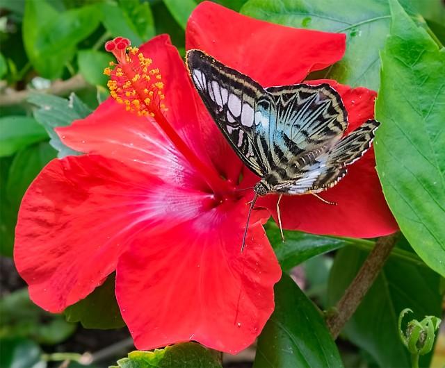 Butterfly 1 MAIN & BLOG