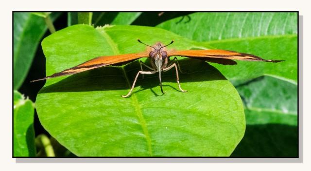Butterfly 2 MAIN & BLOG