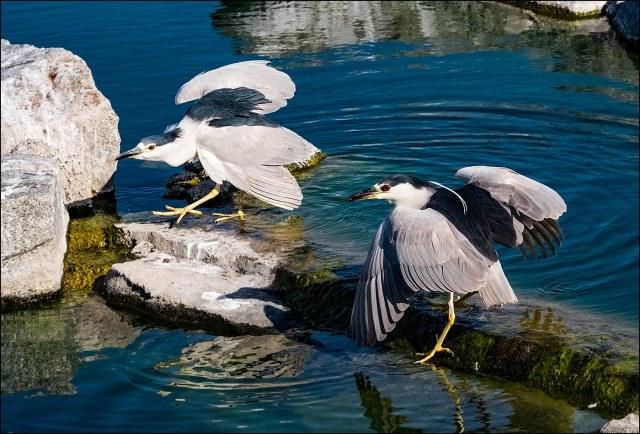 2 Herons BLOG