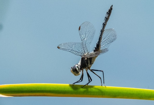 Dragonfly 1 main & AZ PHOTOS & BLOG
