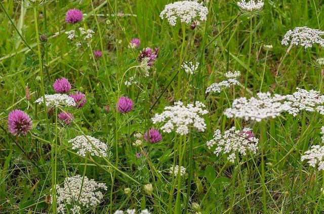 wildflowers 1 MAIN & BLOG