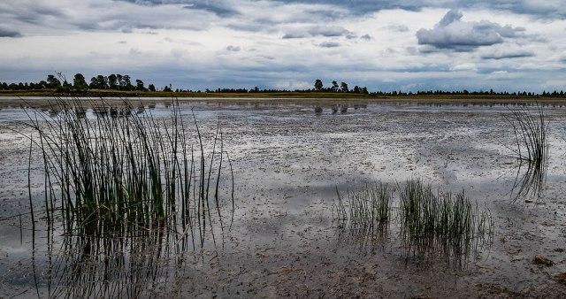 ashurst-lake-1-main