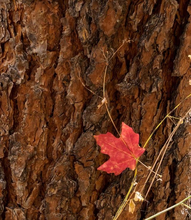 leaf-main-blog