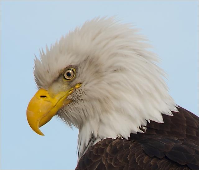 nature-eagle-at-homer-main-blog-12-15-16