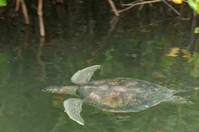 sea-turtle-4-main-blog