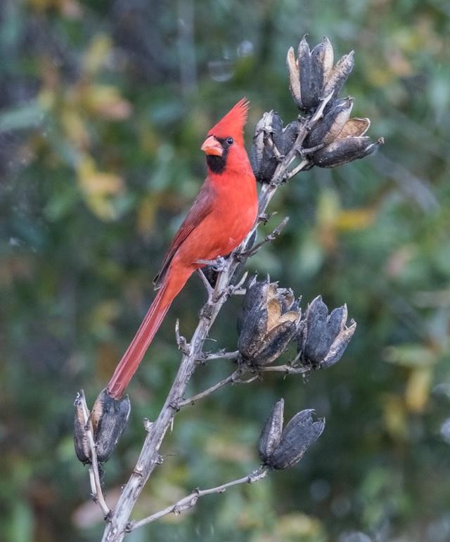 Cardinal 3 MAIN & BLOG