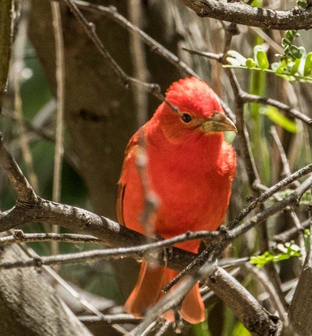 Cardinal MAIN & BLOG