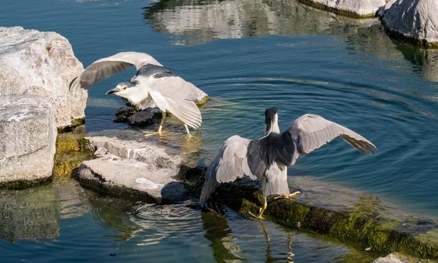 Getting Crowded AZ BIRDS & BLOG