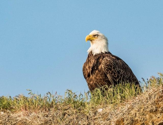 Eagle 1 MAIN, BLOG