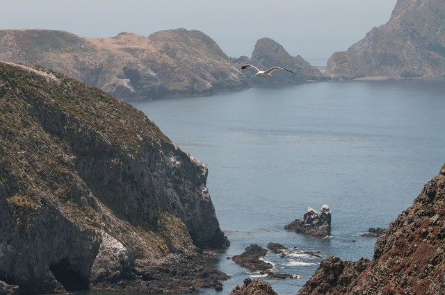 Channel Islands May 2008-3371 NAT PARK BLOG