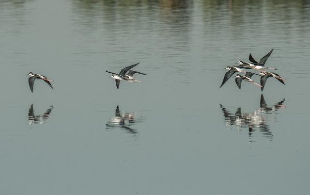 stilts MAIN, SWBIRDS, LPHOTO, BLOG