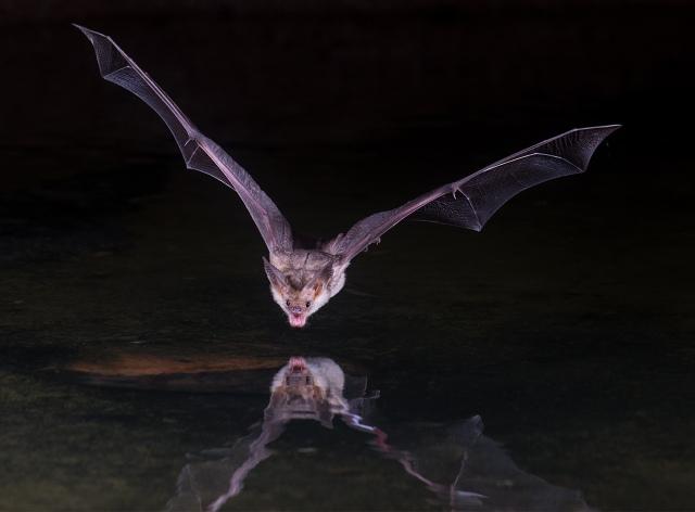 Amado Bat LPHOTO, MAIN, BLOG