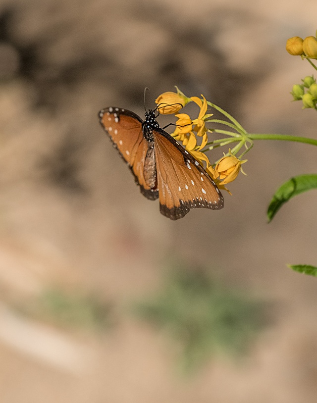 Butterfly 2 MAIN, BLOG