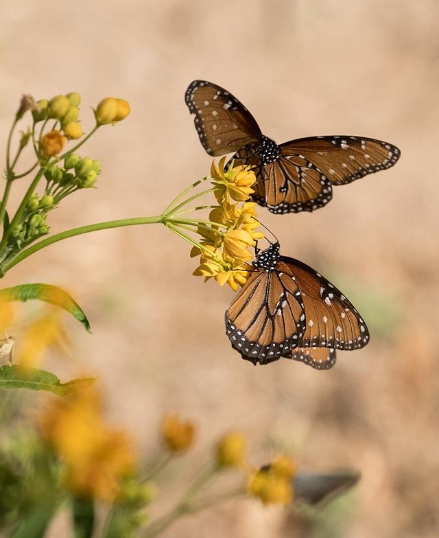 Butterfly 4 MAIN, BLOG