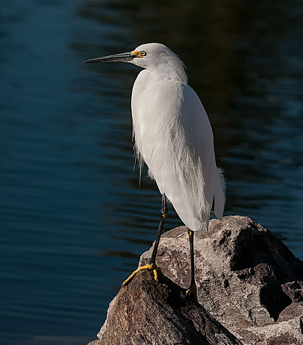 Egret at Papago LPHOTO, BLOG