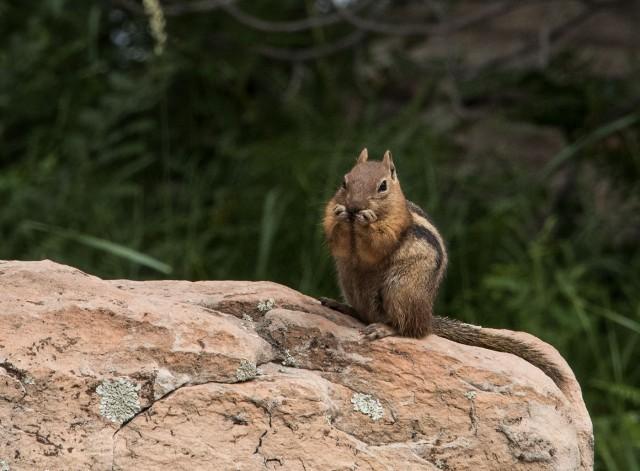 Squirrel LPHOTO, BLOG