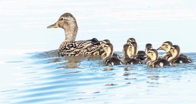 Little family LPHOTO, BLOG