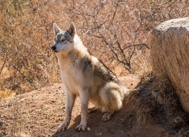 Wolf MAIN, BLOG