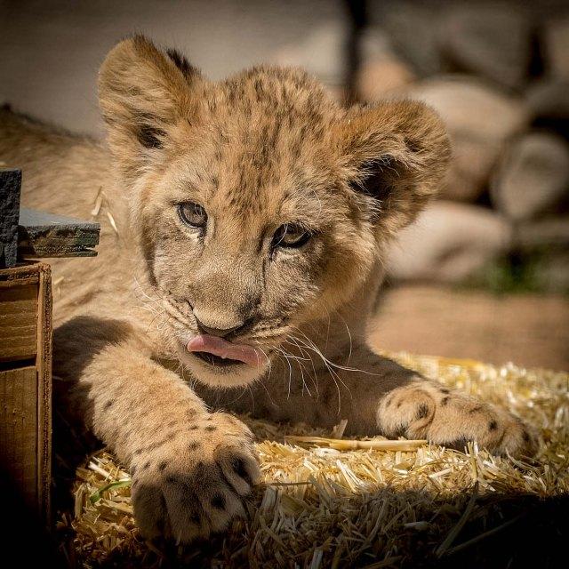 Baby cub 3-29-18 MAIN, BLOG