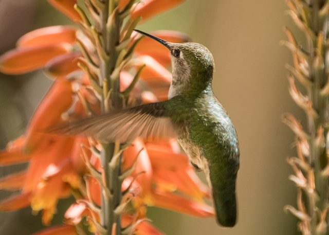 Boyce 3-18-18 LPHOTO, SWBIRDS, PHOTO OF DAY, BLOG