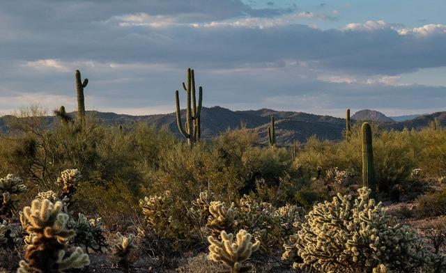 Nightime in desert 4-19-18 MAIN, BLOG, PHOTO OF DAY