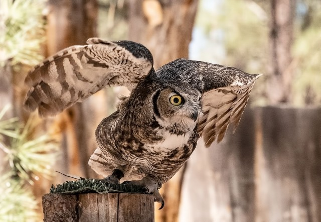Euroasian Eagle Owl LPHOTO, BLOG