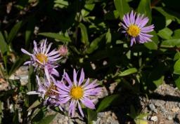 Flowers 1 MAIN